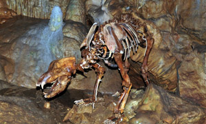 Bärenhöhle Erpfingen