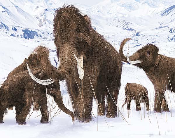 san francisco best quality sold worldwide EiszeitQuell Sammelaktion: alles über das Mammut